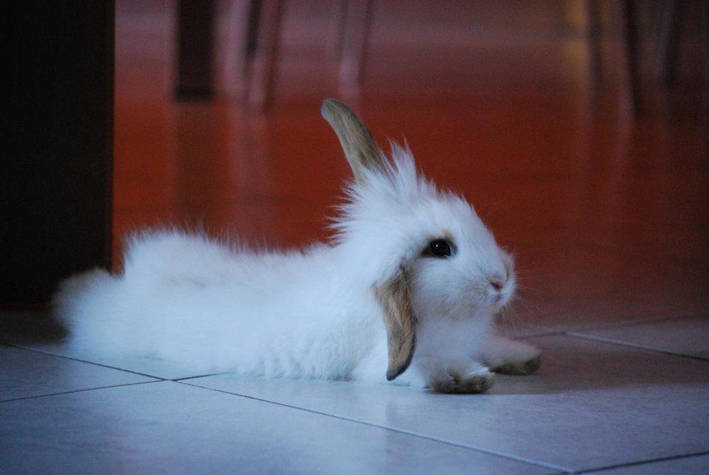 2009, 5-23 Daily Bunny