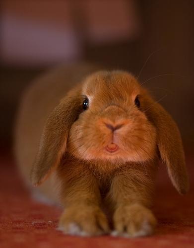 2009, 5-27 Daily Bunny