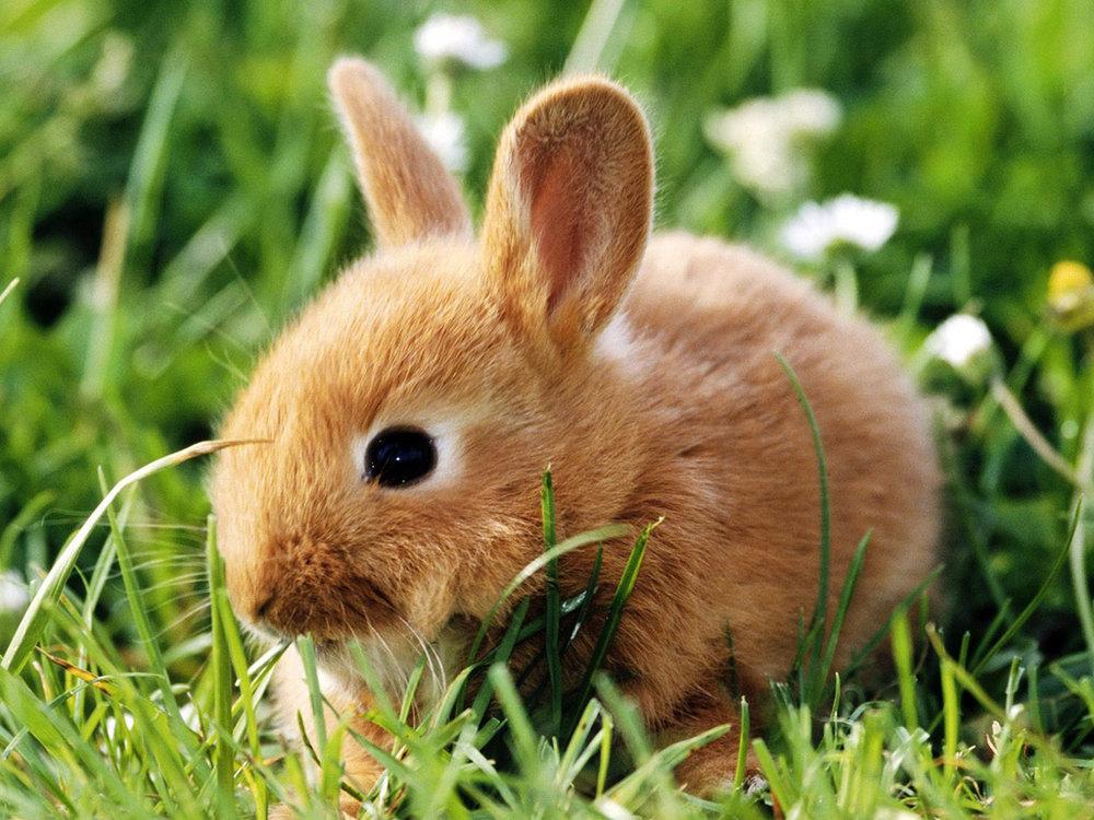 2009, 5-28 Daily Bunny