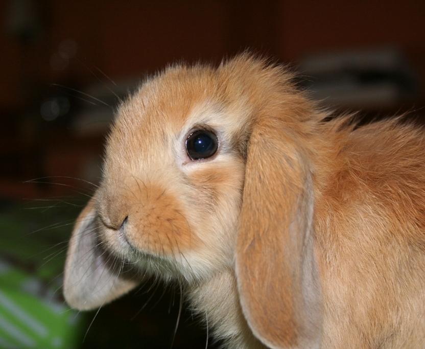 2009, 5-30 Daily Bunny