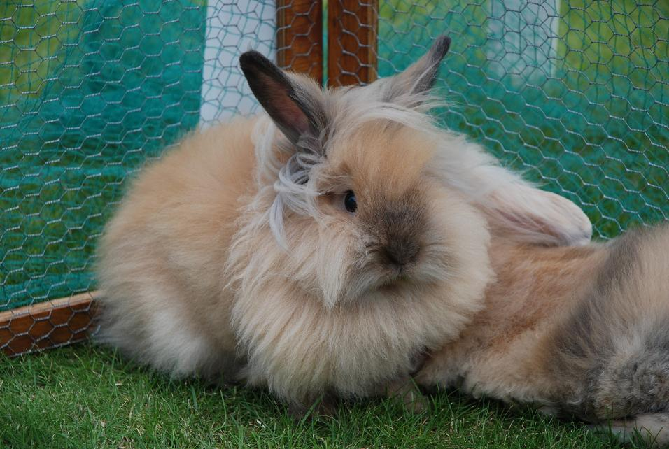 2009, 6-4 Daily Bunny