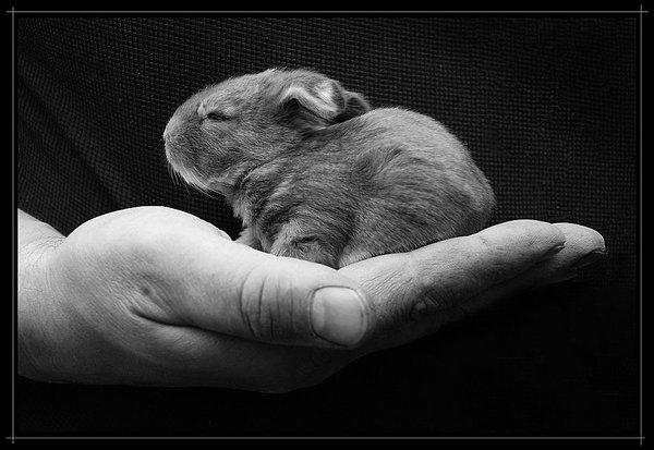 2009, 6-8 Daily Bunny