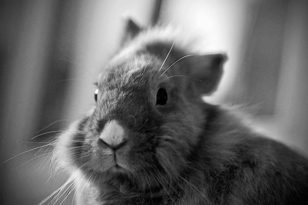 2009, 6-1 Daily Bunny