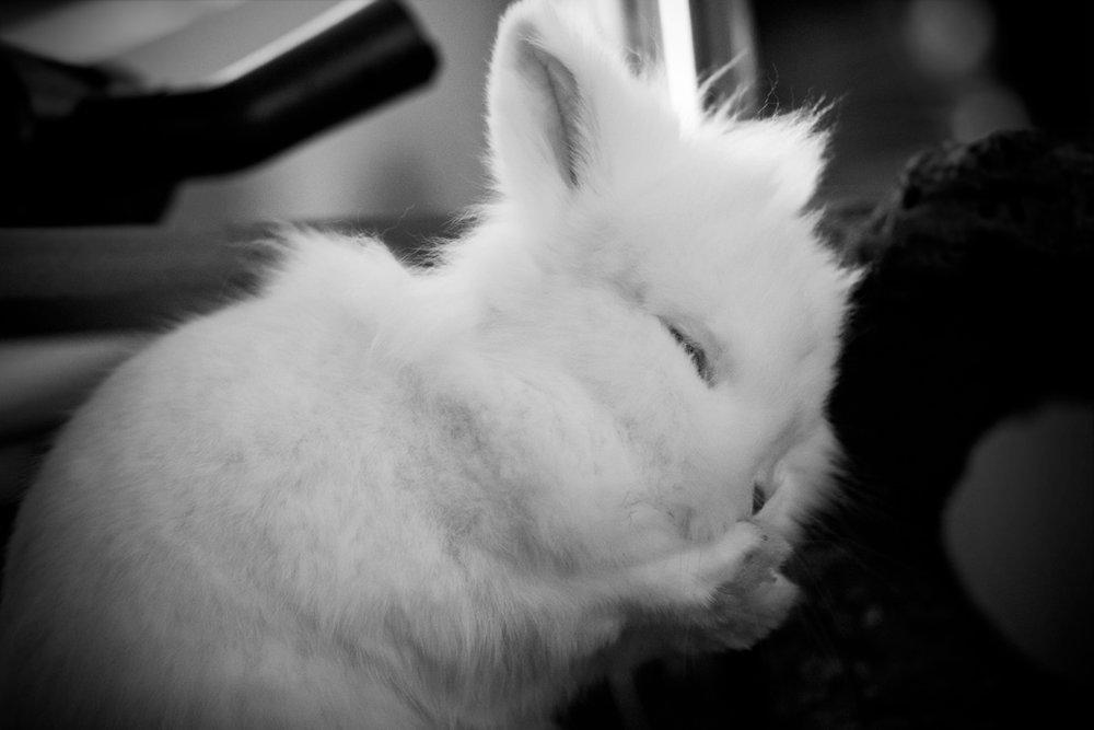2009, 6-20 Daily Bunny