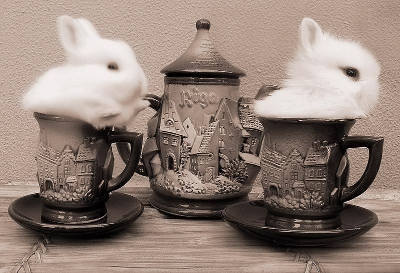 2009, 6-22 Daily Bunny