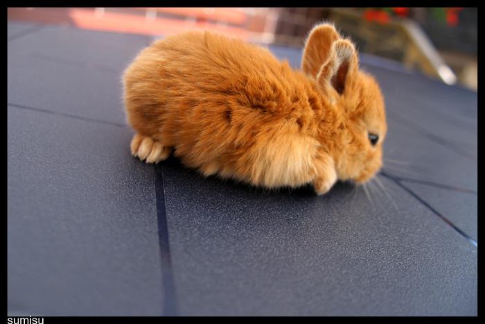 2009, 6-24 Daily Bunny