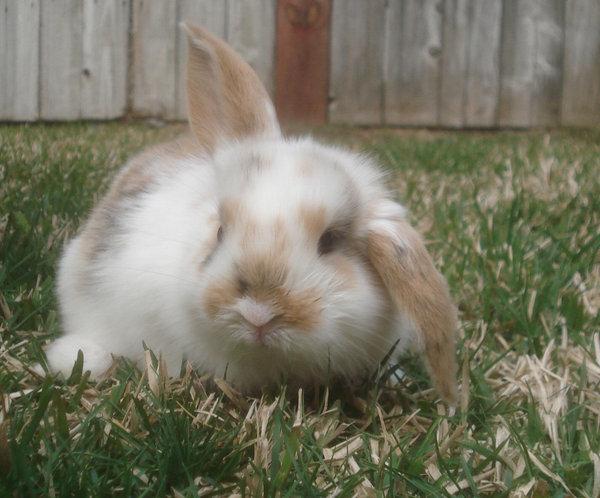 2009, 6-25 Daily Bunny