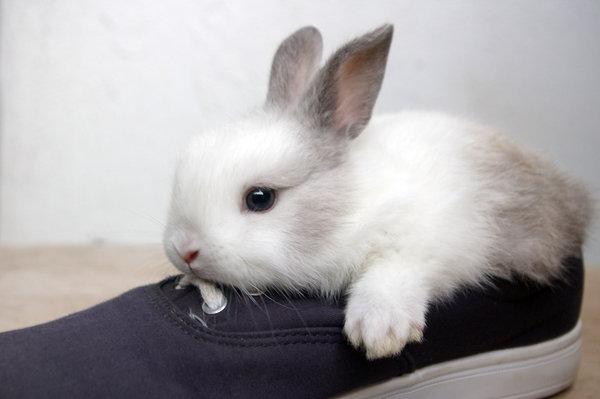 2009, 6-26 Daily Bunny