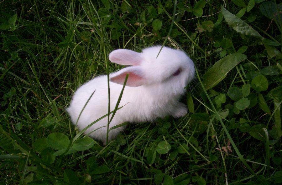 2009, 6-28 Daily Bunny