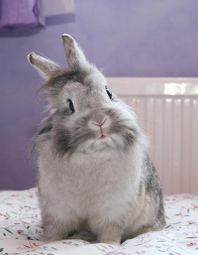 2009, 6-29 Daily Bunny