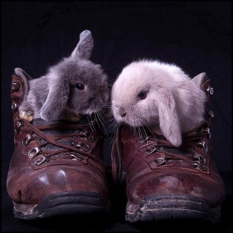 2009, 7-15.1 Daily Bunny