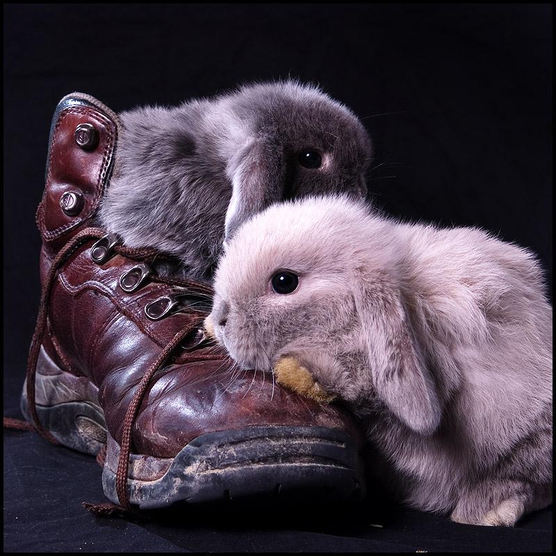 2009, 7-15.2 Daily Bunny