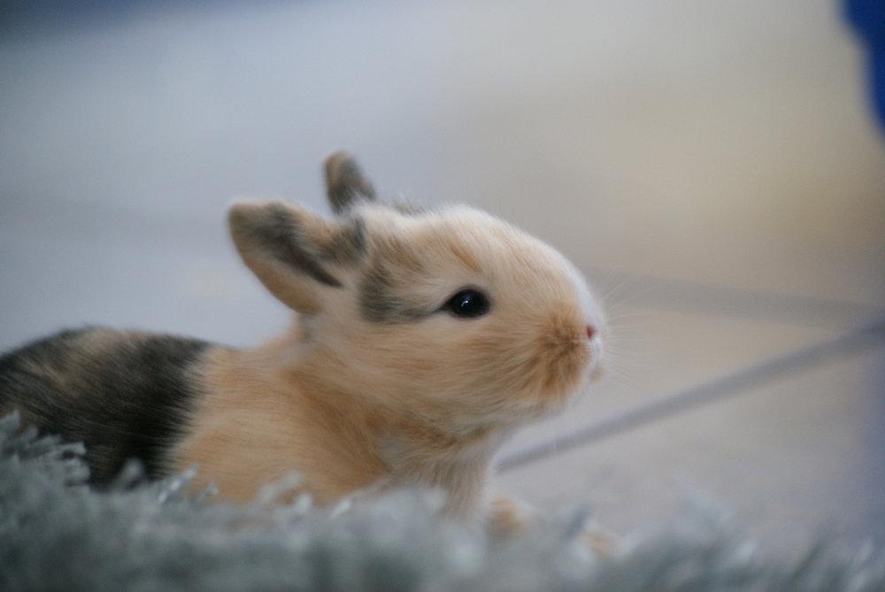 2009, 7-20 Daily Bunny