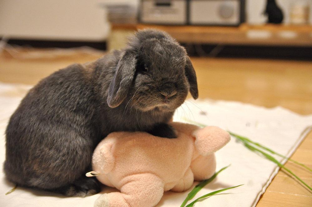 2009, 7-22 Daily Bunny