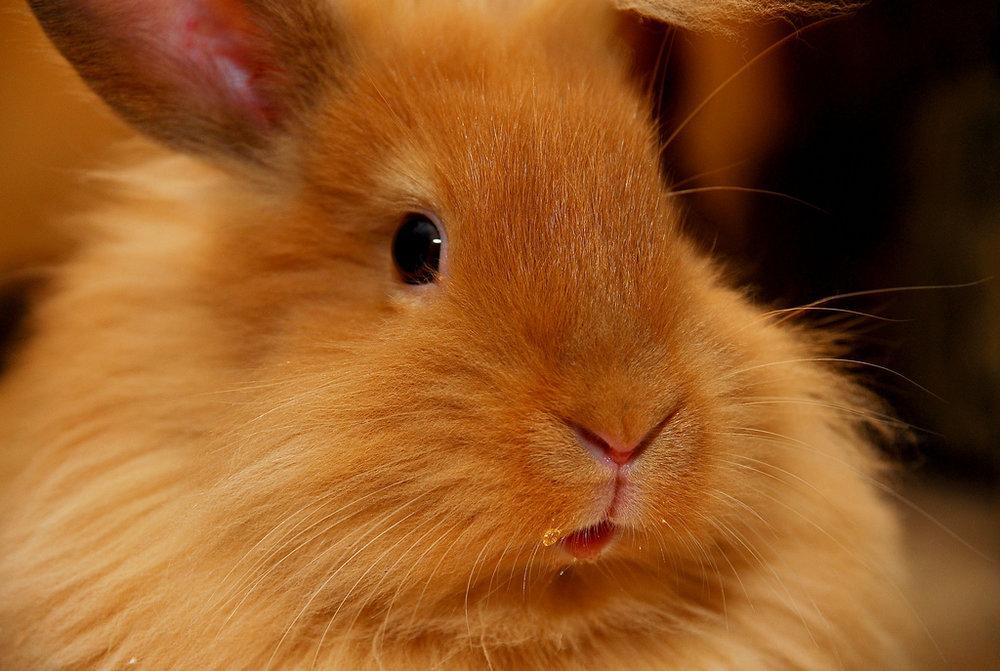 2009, 7-25 Daily Bunny