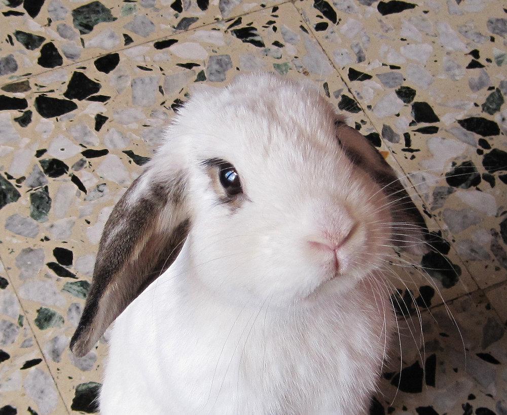2009, 7-26 Daily Bunny