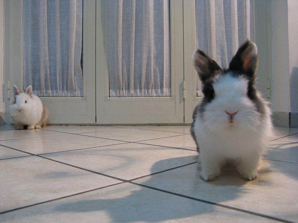 2009, 7-27 Daily Bunny