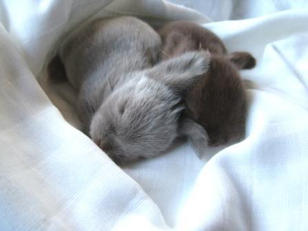 2009, 7-29 Daily Bunny.2