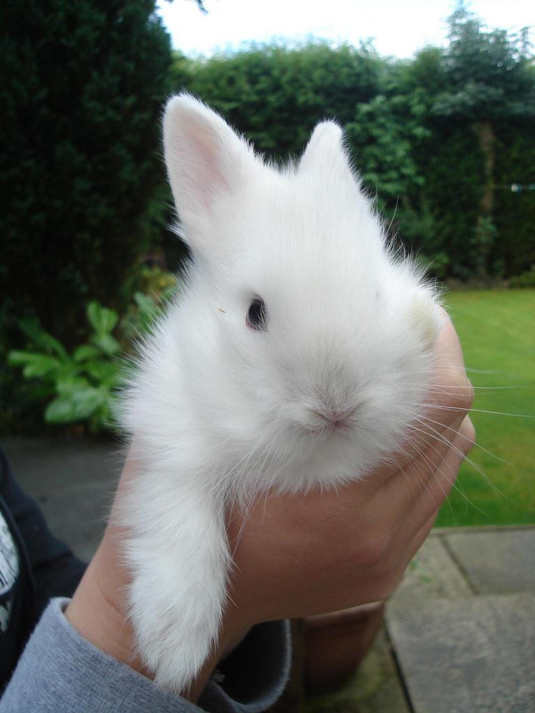 2009, 7-30 Daily Bunny