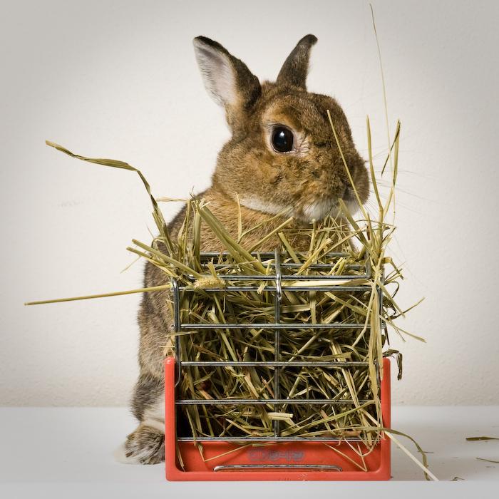 2009, 8-1 Daily Bunny