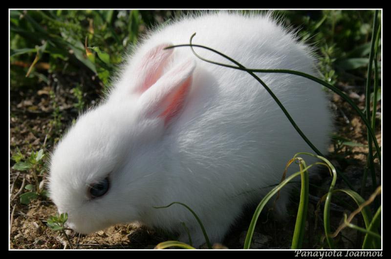 2009, 8-10 Daily Bunny
