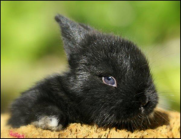 2009, 8-11 Daily Bunny