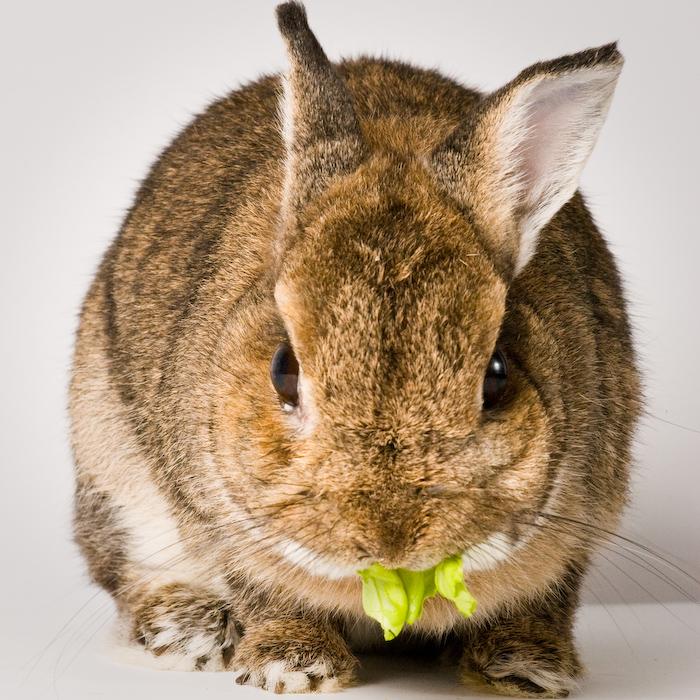 2009, 8-12 Daily Bunny