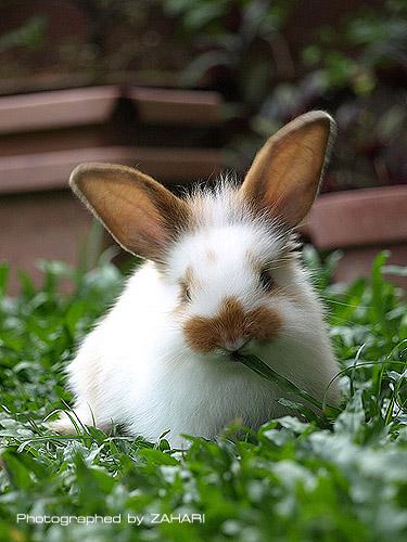 2009, 8-13 Daily Bunny
