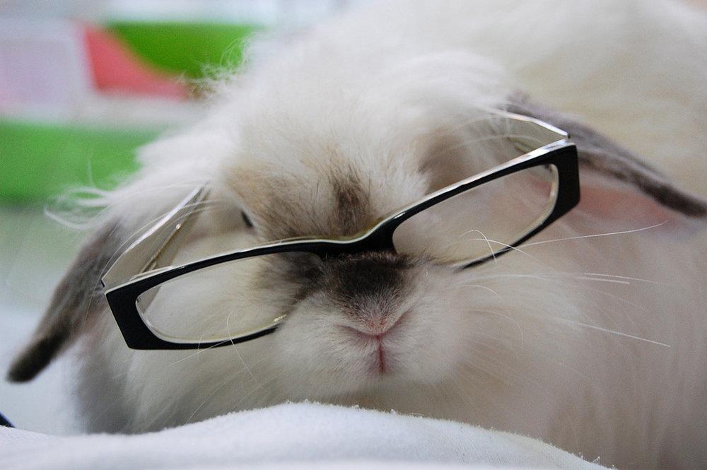 2009, 8-14 Daily Bunny