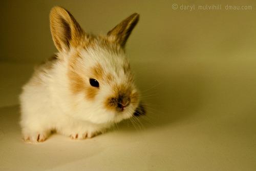 2009, 8-16 Daily Bunny