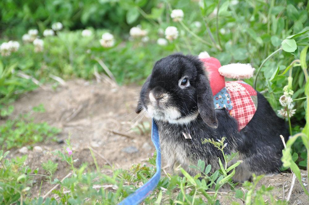 2009, 8-17 Daily Bunny