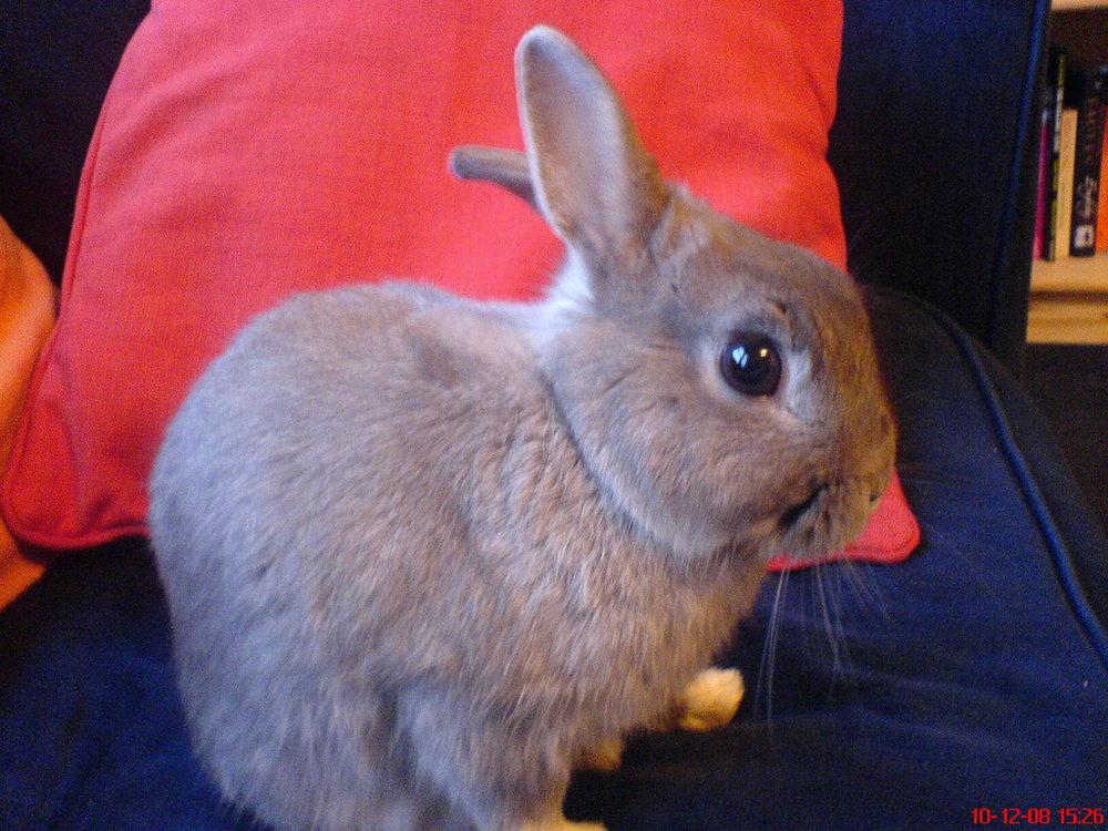 2009, 8-19 Daily Bunny.2