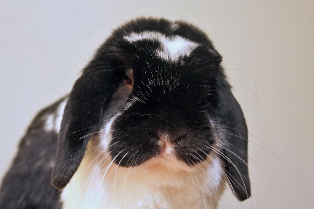 2009, 8-20 Daily Bunny