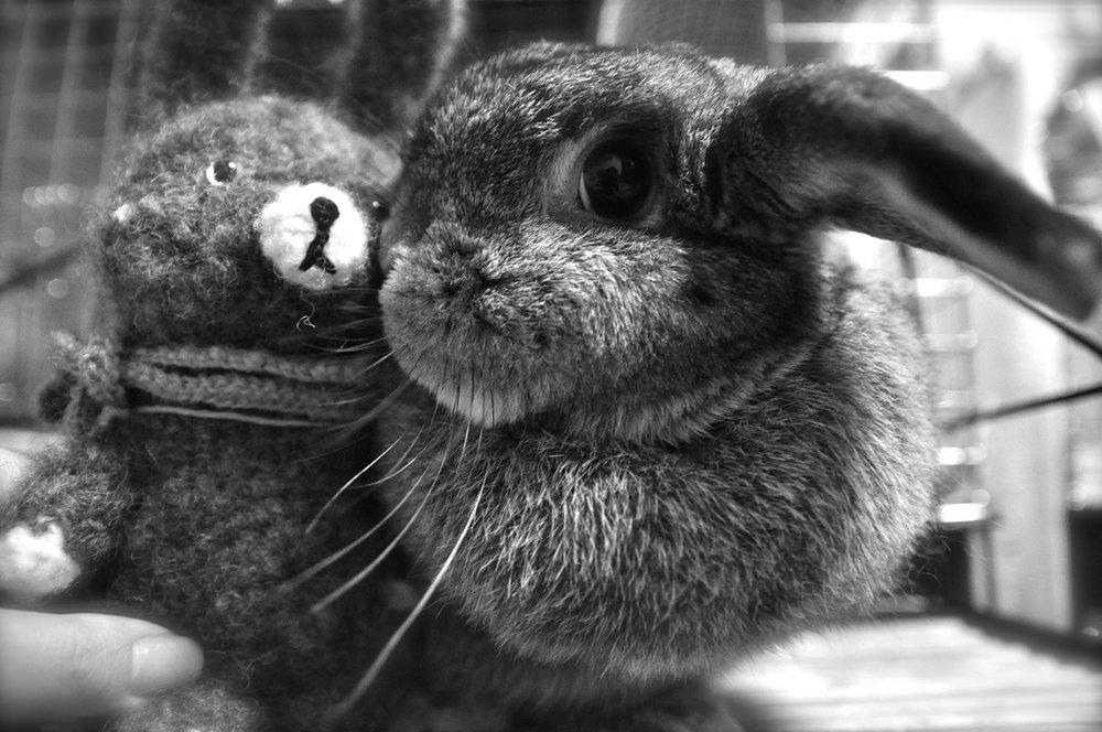 2009, 8-21 Daily Bunny