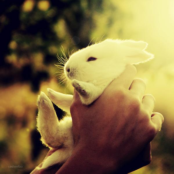2009, 8-5 Daily Bunny