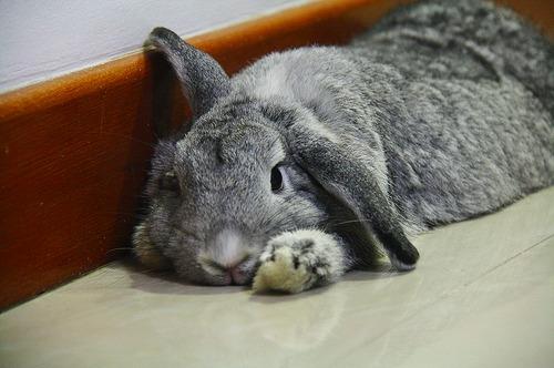 2009, 8-26 Daily Bunny