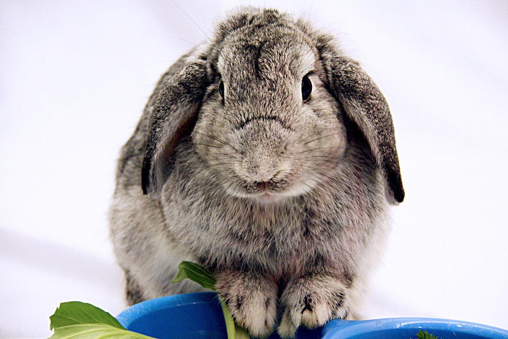 2009, 8-27 Daily Bunny
