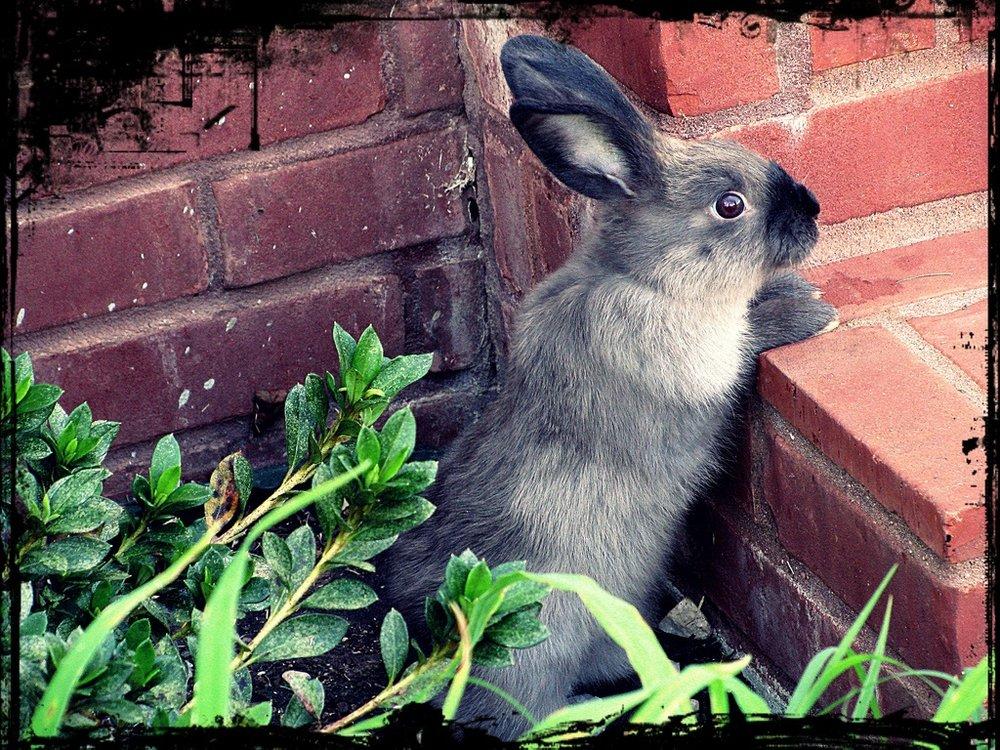 2009, 8-30 Daily Bunny