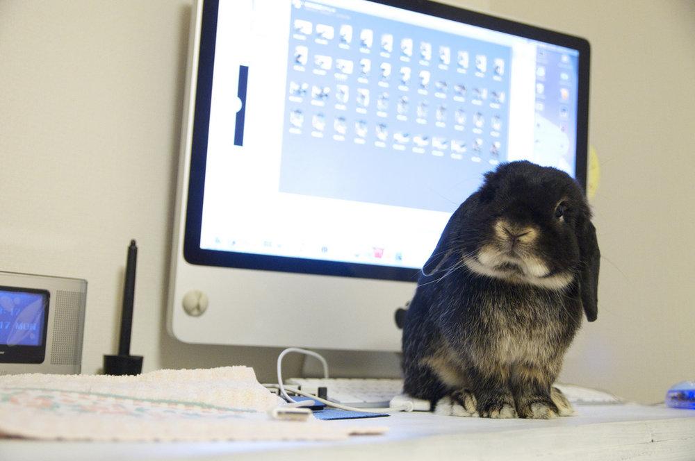 2009, 8-31 Daily Bunny