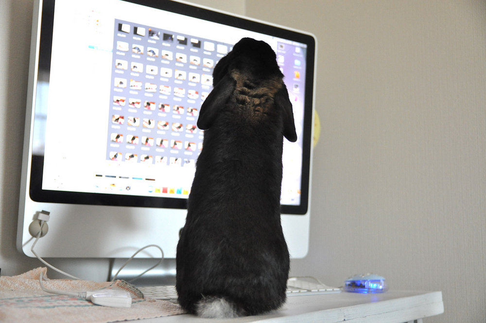 2009, 8-31 Daily Bunny.2