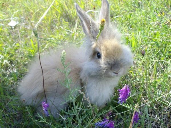 2009, 9-5 Daily Bunny