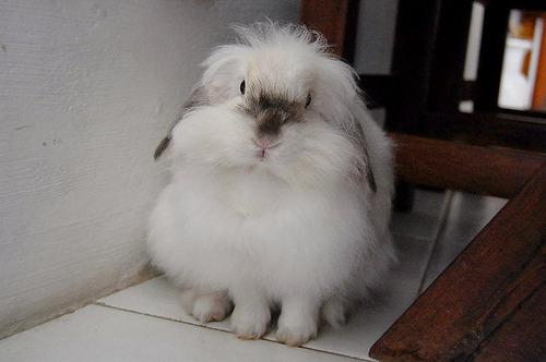 2009, 9-6 Daily Bunny