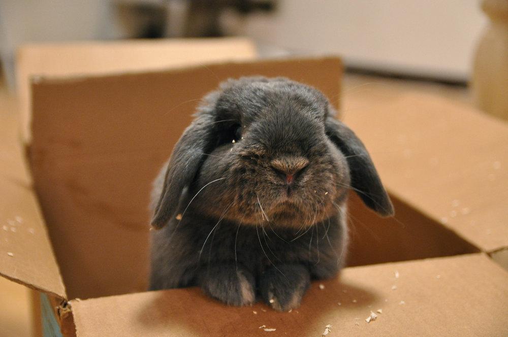 2009, 9-9 Daily Bunny