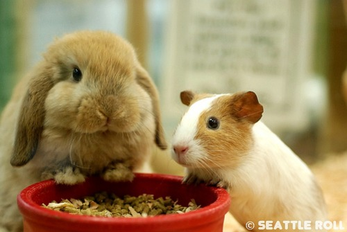 2009, 9-14 Daily Bunny.2