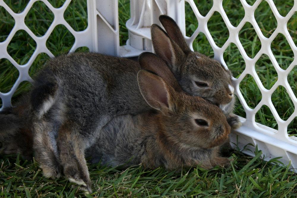 2009, 9-22 Daily Bunny