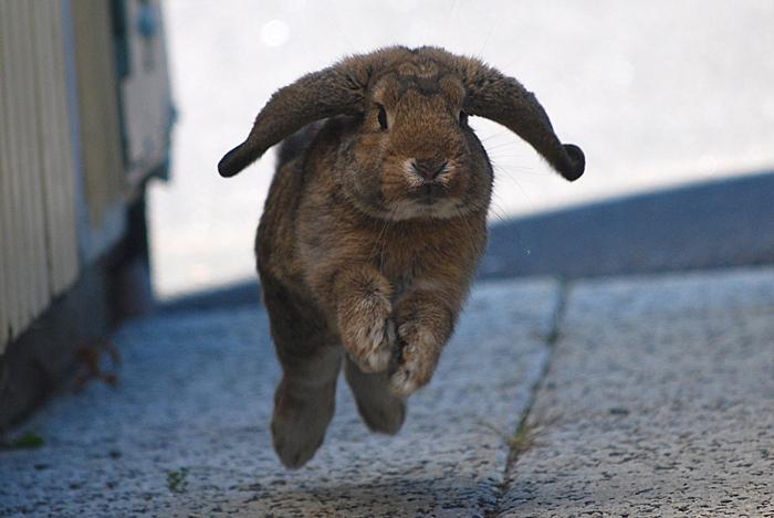 2009, 9-25 Daily Bunny
