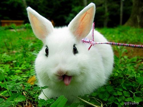 2009, 9-28 Daily Bunny