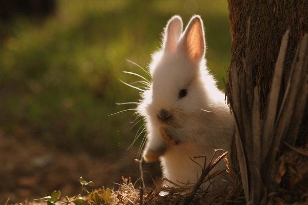 2009, 9-29 Daily Bunny