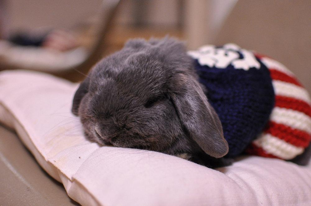 2009, 9-30 Daily Bunny