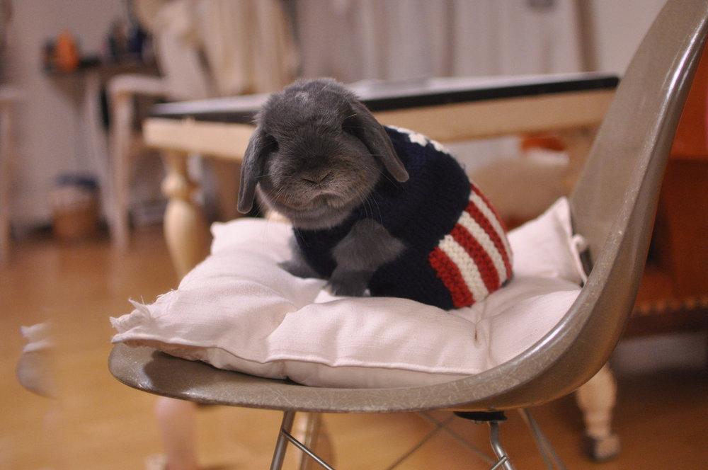2009, 9-30 Daily Bunny.2